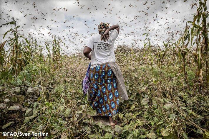 Koronavirüs önlemleri ve 'çöl çekirgeleri' dünyada açlık sınırını arttırabilir