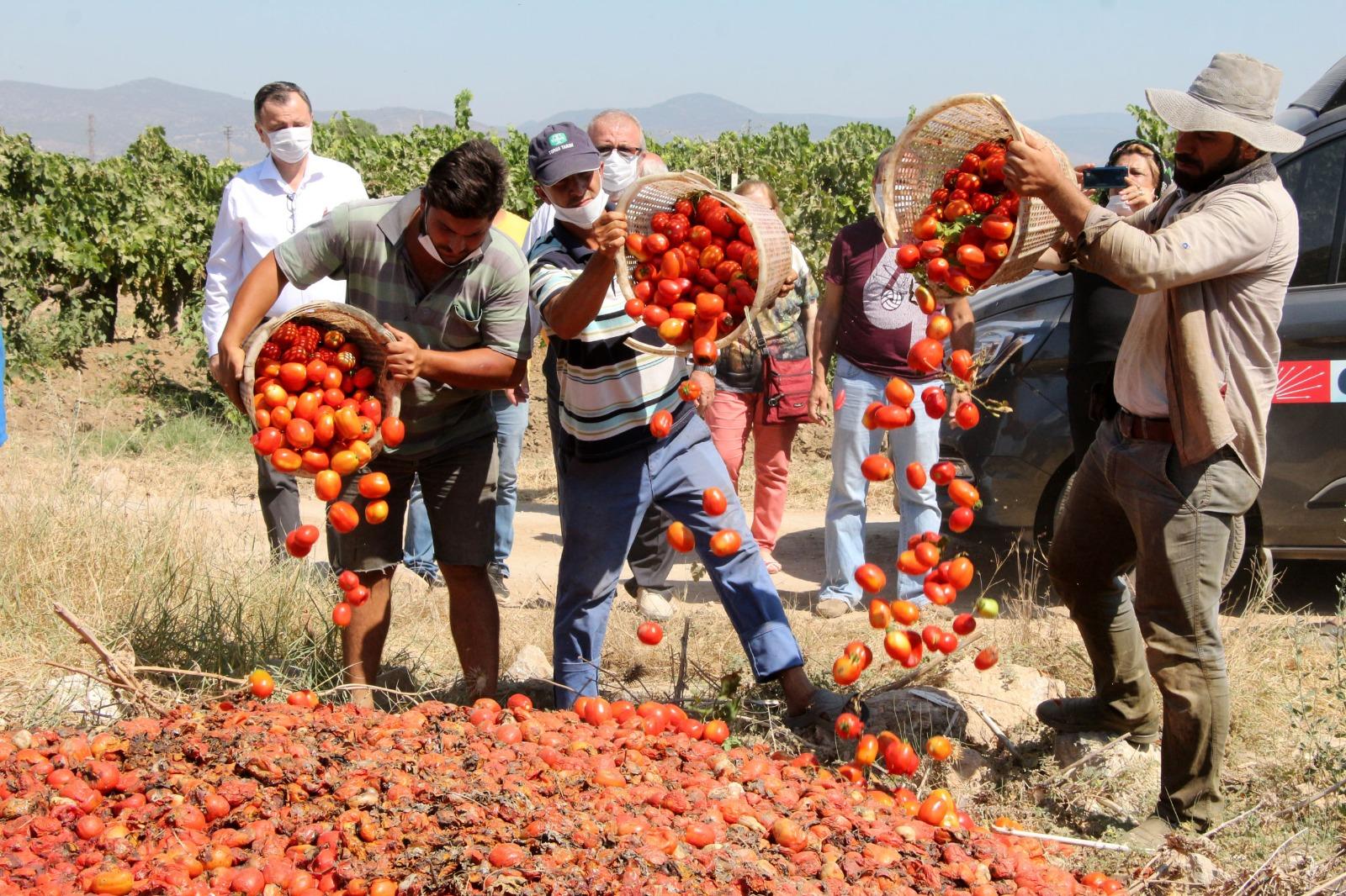 Salça fabrikaları domates fiyatlarını 30-35 kuruşlara kadar geri çekti!