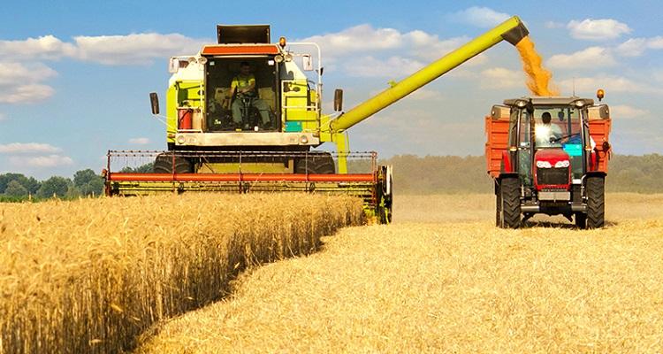 Türkiye buğday ithalatı ve unlu mamul ürünlerdeki ihracatta dünya birinciliğine oynuyor