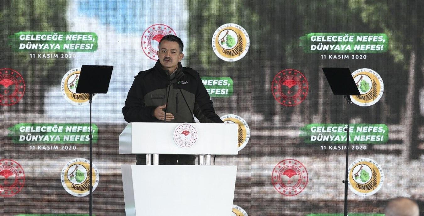 13 Bin futbol sahası büyüklüğünde alanda 13,8 milyon fidanı toprakla buluşturduk