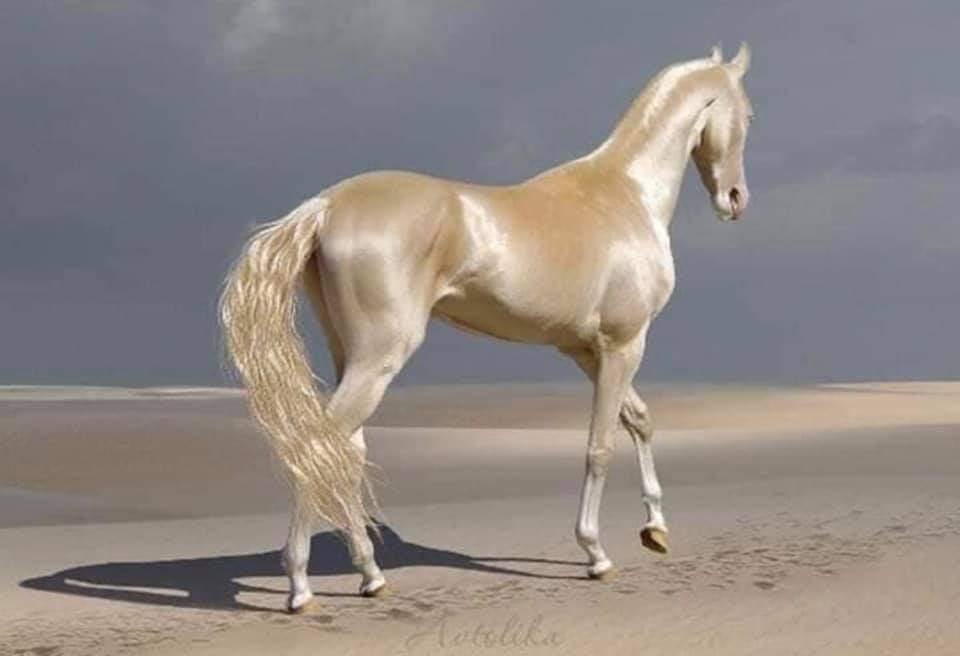 Stalin tarafından katledilerek tarihe geçen Türk atı