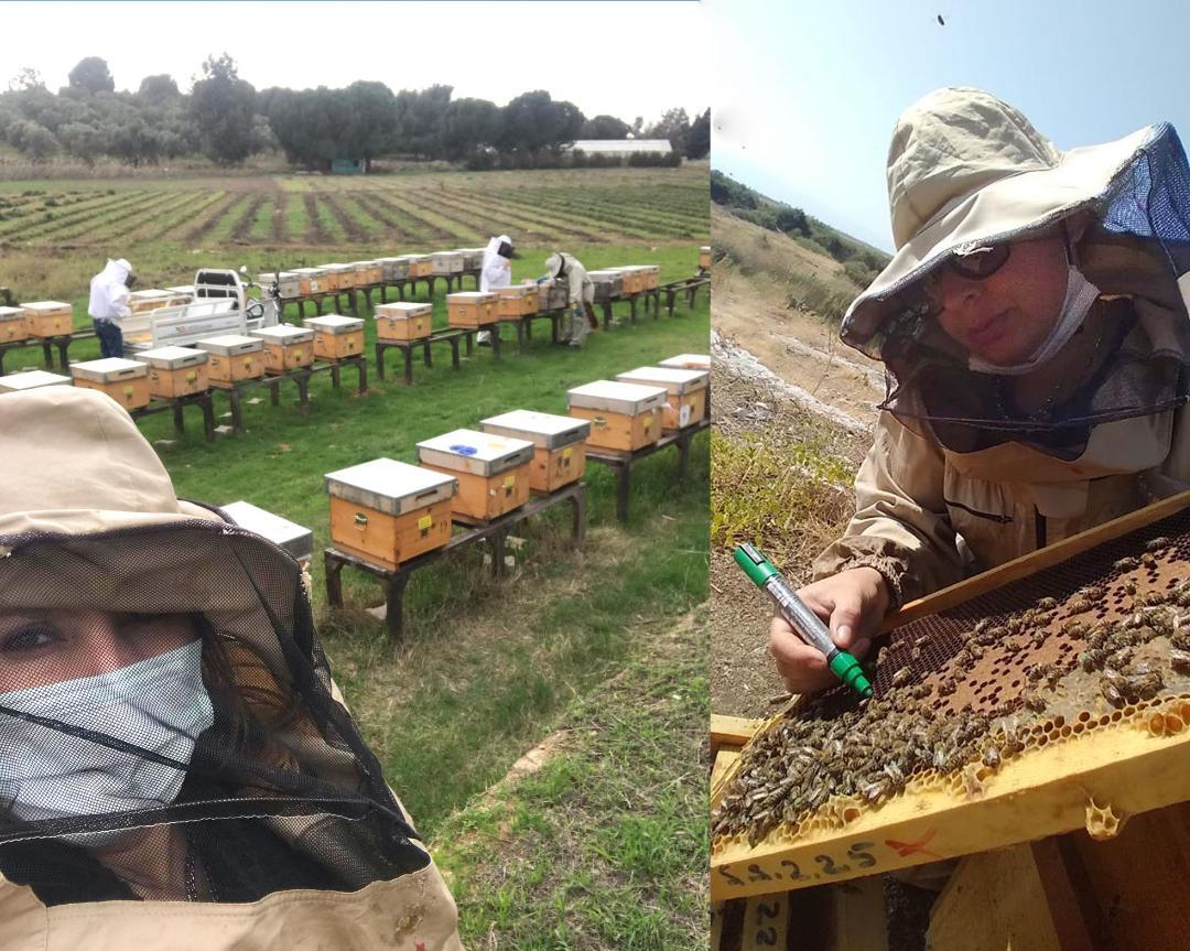 İzmir'de arı ırkı ıslah projesi ve Efe Arısı üretim çalışmaları devam ediyor