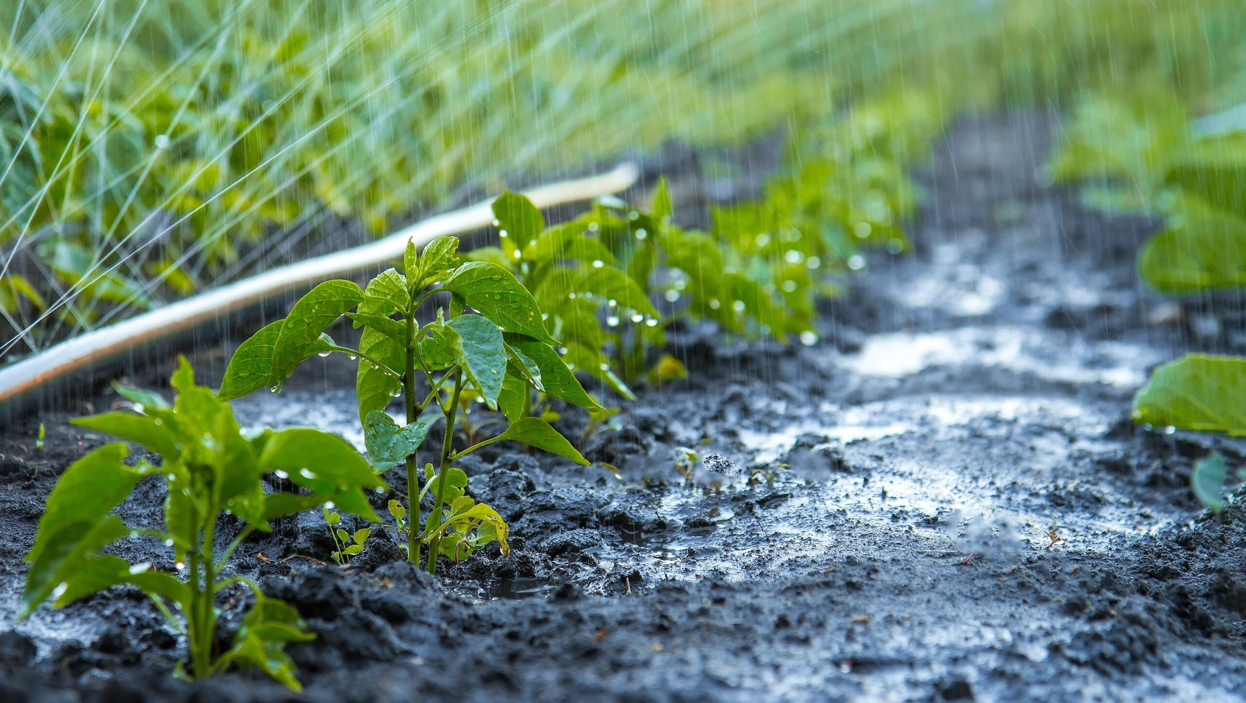 Birçok tarım ürününde hasat sırasında %30-35'lere varan kayıplar yaşanıyor!