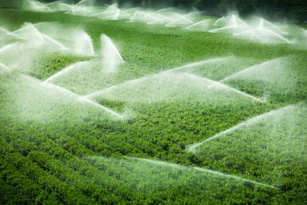 'Tarımda su tasarrufu siber fiziksel teknolojilerle mümkün'