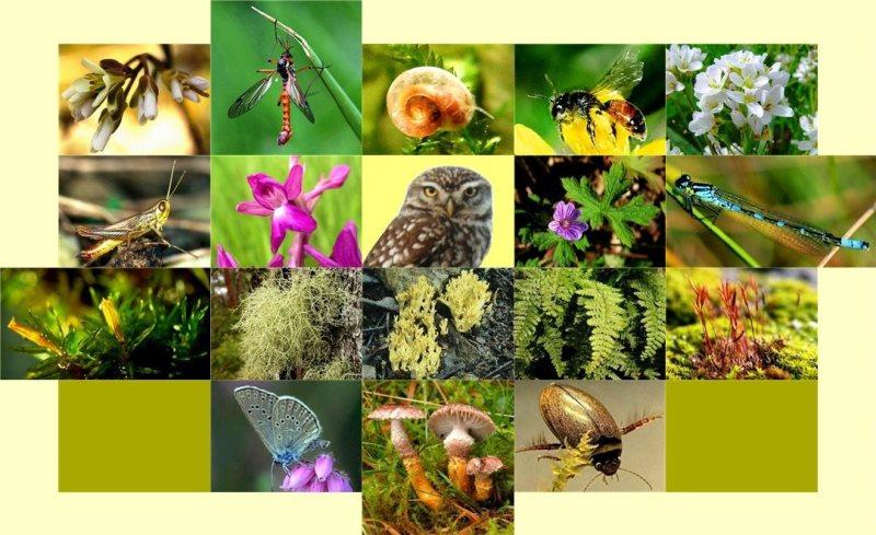 'Biyolojik çeşitliliği korumak artık bir tercih değil, zorunluluk'
