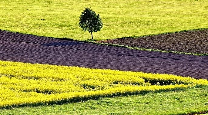 Pandemi döneminde tarımsal üretimin 'stratejik' önemi daha iyi anlaşıldı