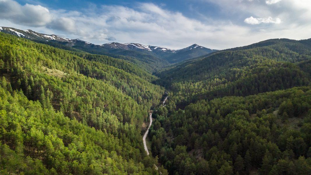 Mavi gezegenin yeşil adaları Ormanlar tehdit altında