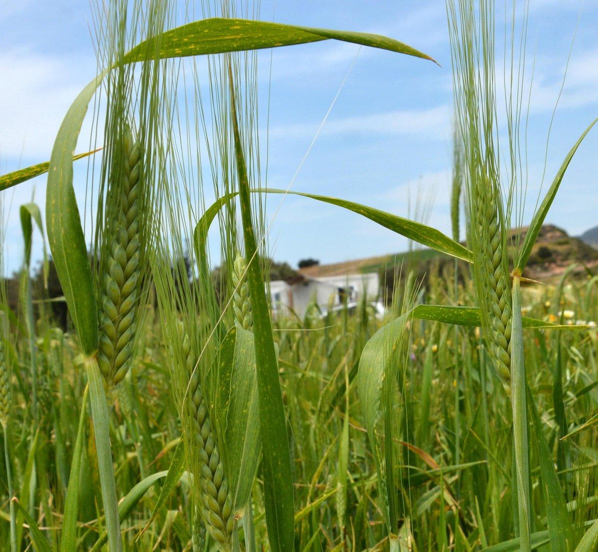 Ağustos'ta bile tarımsal üretim fiyatlarında yükseliş sürdü