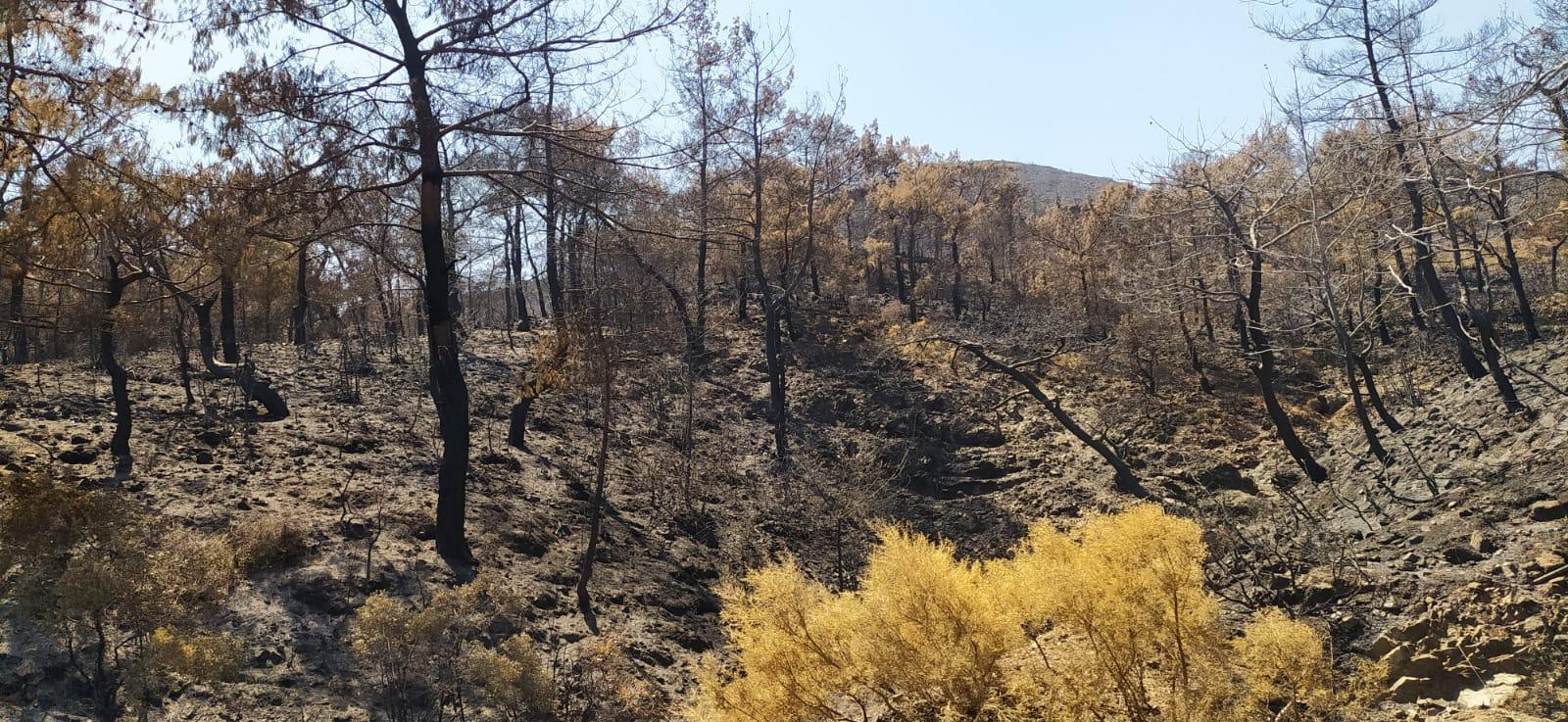Bu yıl 254.000 futbol sahası büyüklüğünde orman alanı yandı!..