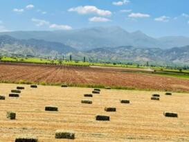 Tarım Ürünlerinde Enflasyon Artıyor:Yıllık 23,35